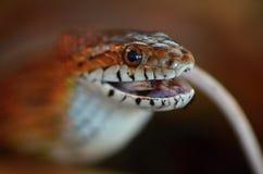 Змейка и мышь Стоковые Изображения