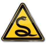Змейка и яд змейки Стоковые Фото