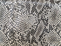 змейка картины Стоковые Фото