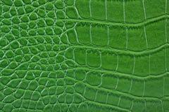 змейка кожи аллигатора зеленая кожаная Стоковое Изображение