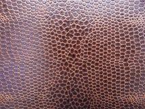 змейка кожи Стоковые Изображения RF