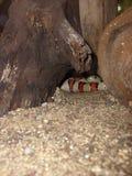 Змейка короля Стоковые Фотографии RF
