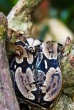 Змейка на ветви дерева Стоковые Фото