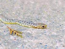 Змейка, на конкретном Бетон подобен для того чтобы покрасить как змейка Nex стоковые фотографии rf