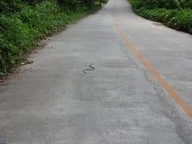 Змейка на проезжей части Стоковое Фото