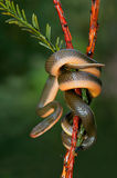 Змейка дома рассвета Стоковые Фото