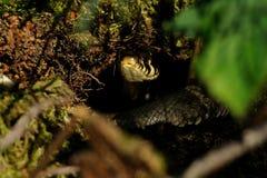 змейка отверстия травы Стоковые Фото