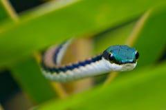 Змейка попыгая Стоковое фото RF