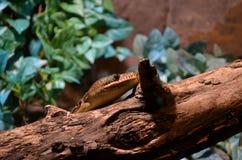 Змейка проползать Стоковые Изображения