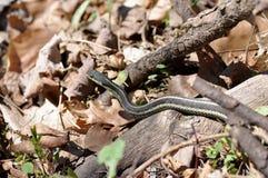 Змейка сада Стоковое Изображение RF