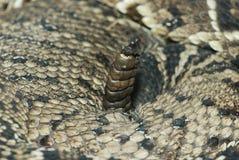 змейка трещотки s Стоковые Изображения RF