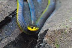 змейка утеса Стоковое Изображение