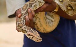 змейка человека удерживания Стоковые Изображения RF
