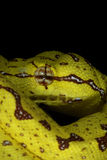 змейка 19 Стоковые Фото