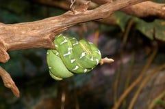 змейка Стоковые Фото