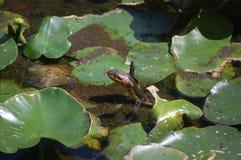 Змейка Стоковое Фото