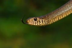 змейка Стоковые Изображения