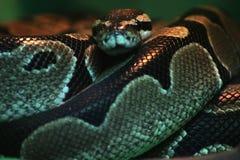 Змейка Стоковое фото RF