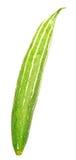 змейка gourd Стоковое Изображение RF