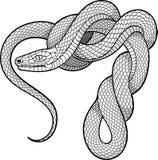 Змейка Ttwisted декоративный элемент Стоковое Изображение RF