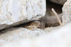 2 змейки воды Стоковое Изображение