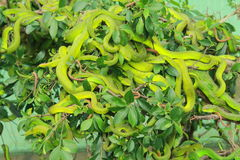 Змейки Стоковая Фотография RF
