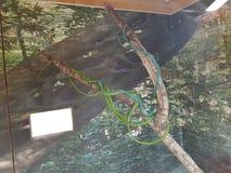 змейки Стоковые Изображения