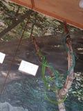 змейки Стоковое Фото