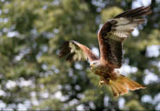 змей летания птицы Стоковое Изображение