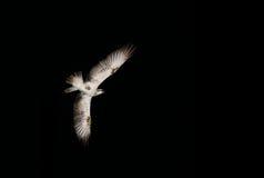 Змей птицы на черной предпосылке неба Стоковые Изображения RF