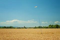 Змей птицы форменный на поляке в пшеничном поле Стоковое фото RF