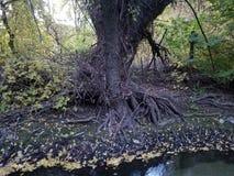 Знайте ваши корни стоковое изображение rf