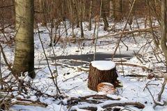 Знаки валки дерева в снежном ландшафте Стоковые Изображения