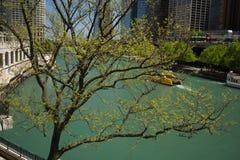 Знаки весны в Чикаго стоковые изображения rf