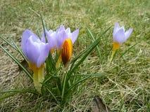 Знаки весны Стоковые Фото