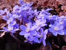 Знаки весны Стоковая Фотография