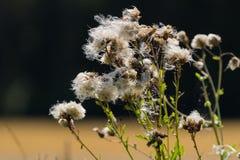 Знаки весны Стоковое Фото
