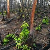 Знаки лесного пожара и regrowth в лесе стоковые изображения rf