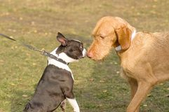 Знакомец 2 собак Стоковые Фотографии RF