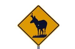 Знак антилопы Pronghorn Стоковое Фото