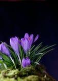 Знак весны Стоковые Фото