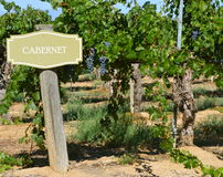 Знак вина Каберне Стоковое Фото