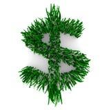 знак доллара травянистый Стоковое фото RF