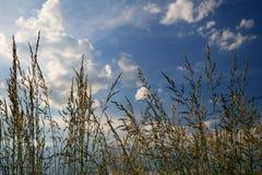 Знак лета Стоковая Фотография