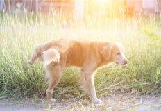 Знак запаха бездомной собаки мужской для зоны Стоковое Изображение