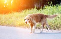 Знак запаха бездомной собаки мужской для зоны Стоковая Фотография