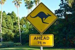Знак кенгуру желтый на зеленой предпосылке леса и пальм на области Tampa Bay стоковые изображения rf