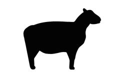 знак овец Стоковая Фотография