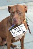 знак протеста собаки носит Стоковое Изображение