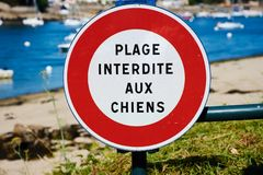 Знак с французским текстом: собаки не позволенные на пляже стоковые изображения rf